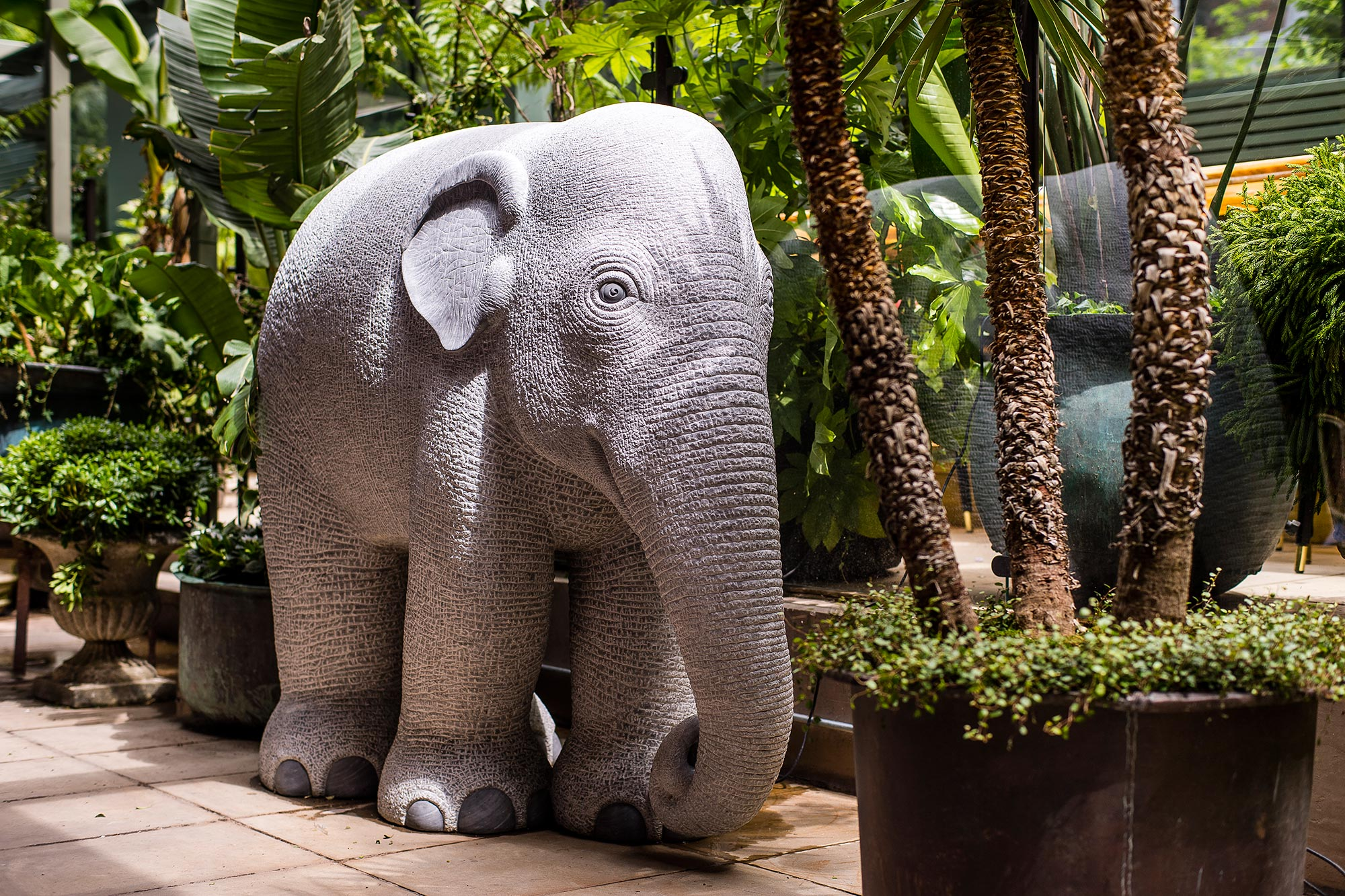 The Ivy City Garden - Elephant - The Ivy City Garden